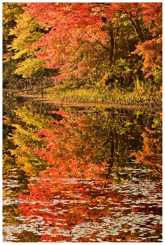 autumn-pond-reflection.jpg :: North Stonington .. Colorful autumn trees are reflected in Clarks Falls pond on an overcast October day.