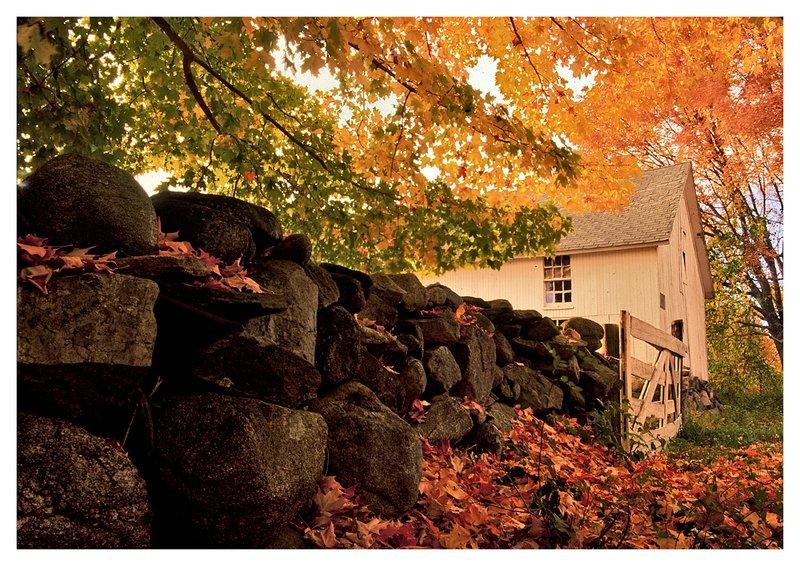 barn-Pequot Trail.jpg :: Stonington - An ancient stone wall and a run-down barn on a misty autumn day.