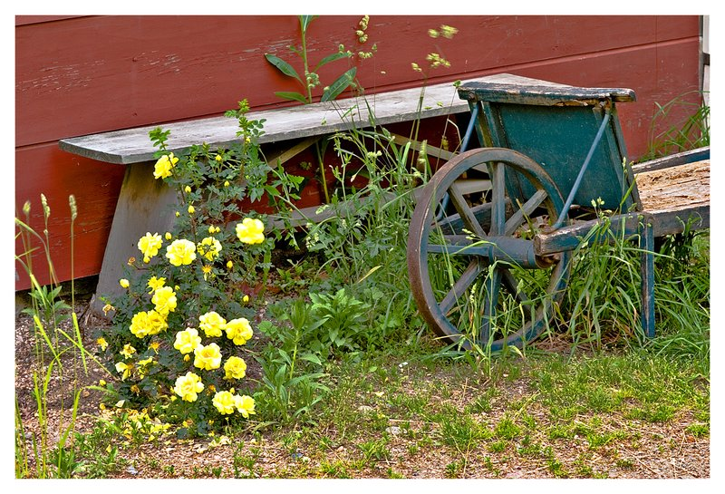 bench-yellow rose.jpg :: Mystic - The back yard of a 18th century home.