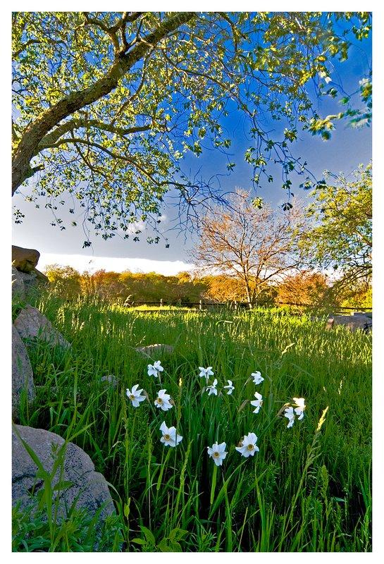 flowers-Haley Farm.jpg :: Mystic Ct. A spring evening at Haley Farm.