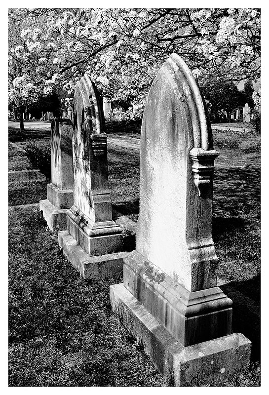 gravestones-spring.jpg