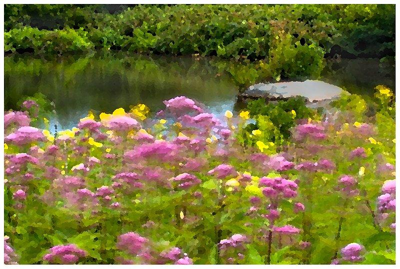 late-summer-pond-.jpg