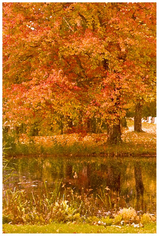 maple-reflection-on-duck-pond.jpg