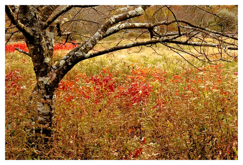 meadow-autumn.jpg :: Noank Ct. A hard frost puts an end to the growing season at Haley Farm.