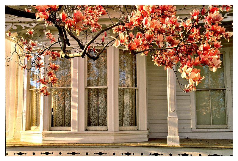 porch and magnolia.jpg :: Mystic - Branches of a Magnolia tree frame a porch of a shipbuilders home.