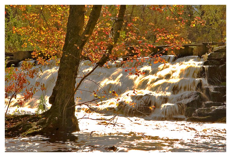 waterfall-maple tree.jpg :: North Stonington - Late afternoon sunlight shines brightly on a maple tree in the stream bed at Clark's Falls.