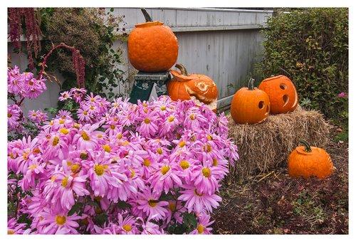Mums-and-Pumpkins.jpg