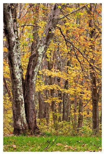 Through-the-Forest.jpg