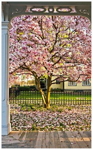 porch-and-magnolia.jpg