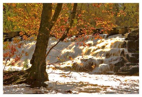 waterfall-maple tree.jpg