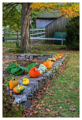 Autumn-Harvest.jpg