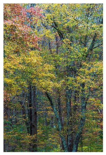 Autumn Glory Ledyard.jpg
