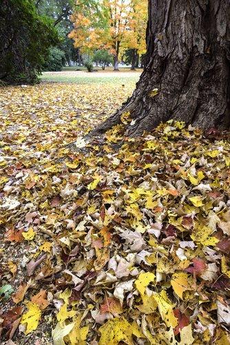 Autumn Groundcover.jpg