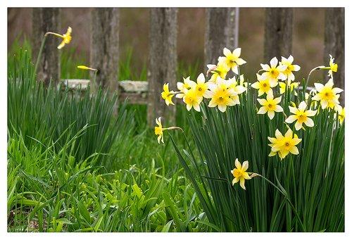 Flowers-of-Spring..jpg