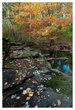 Brook-Edge-in-Fall.jpg