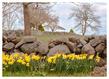_Spring-in-Stonington(1).jpg