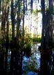 Honey Island Swamp.jpg