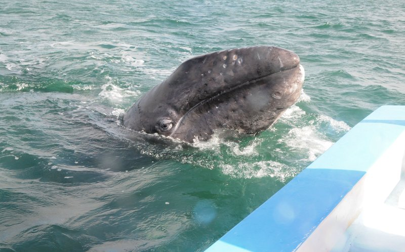 Whales (18).jpg