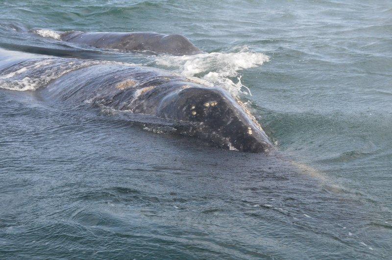 Whales (4).jpg