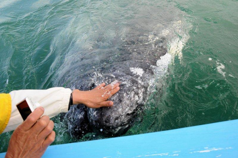 Whales (7).jpg