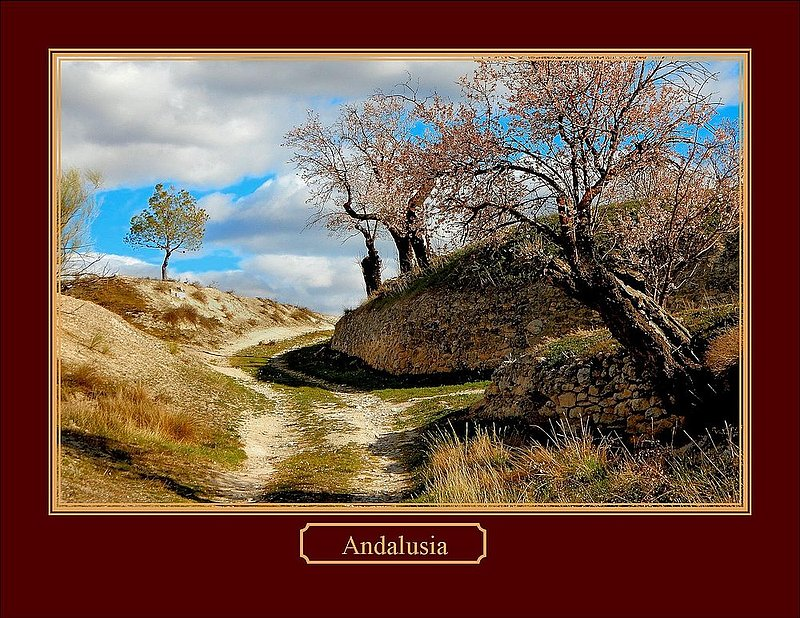 Andalusia Lane.jpg