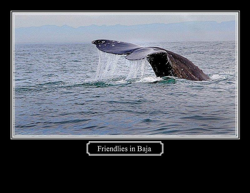 Friendlies in Baja.jpg