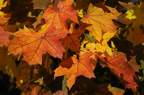 Autumn Leaves Color Niagara 1 W.jpg