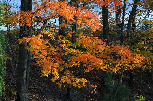 Autumn Leaves W.jpg