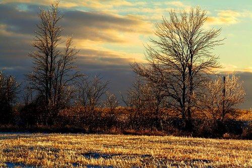 Early Frost Niagara W.jpg