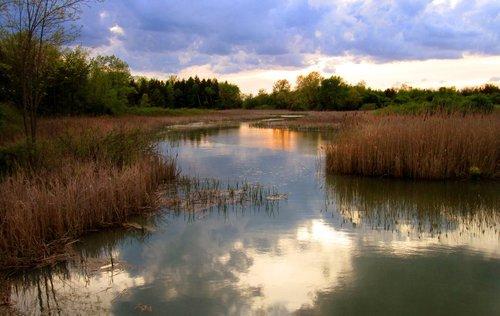 Evening Stroll 1612 W Crop.jpg