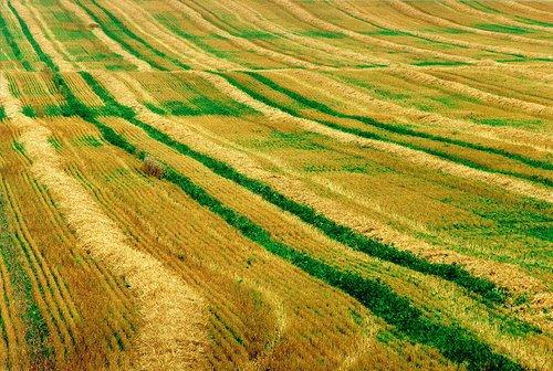 Late Harvest W.jpg