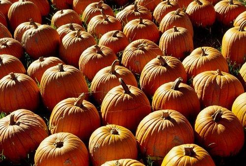 Pumpkin Time in Niagara W.jpg