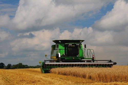 Wheat Harvest (5) W.jpg