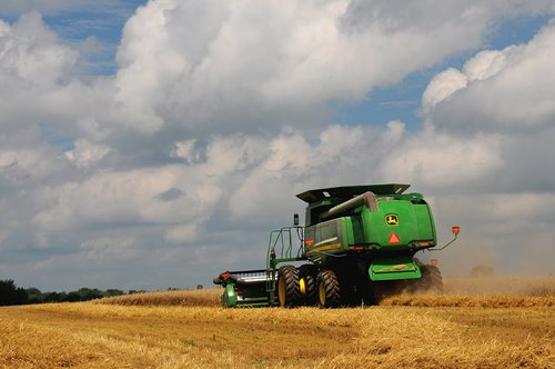 Wheat Harvest (6) W.jpg