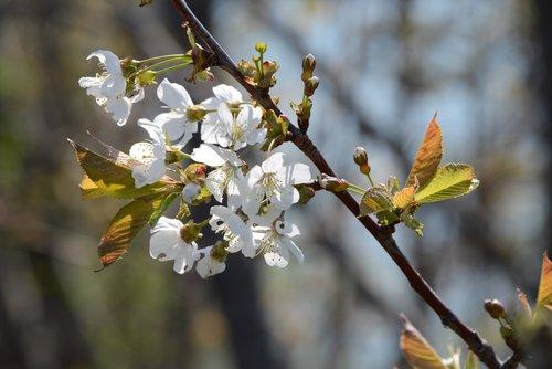 Blossums1.jpg