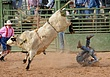 Bad Bull.jpg