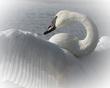 Angelic.jpg