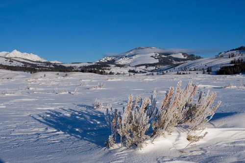 TC-Yellowstone winter-DYNP-W-00001.jpg