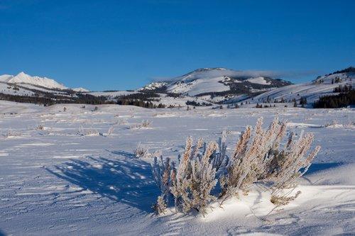 TC-Yellowstone winter-DYNP-W-00001.jpg
