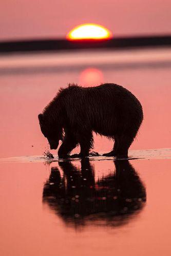 TC-Alaska Brown Bears-D00055-000030.jpg