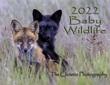 Baby Wildlife Calendar Cover.jpg