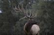 TC-Bull Elk Velvet-D00313-00110.jpg