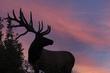 TC-Bull Elk Velvet-D00313-00176.jpg
