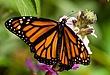 butterfly046.jpg