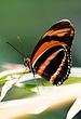 butterfly065.jpg