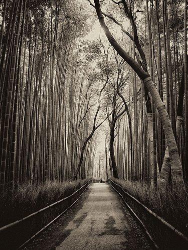 Bamboo-Forrest-0882-sepia1.jpg