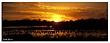01222011 panoramic - Cosumnes River Preserve Waterfowl Sunset2.jpg