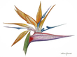 Flowers of Paradise - Paper.jpg