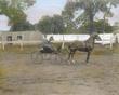 Leesburg Horse Show.jpg