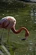 SD Zoo 220 copy.jpg